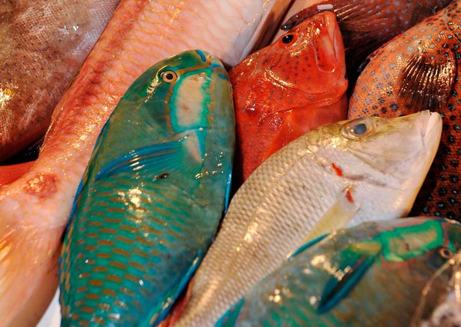 Fresh Fish On Sale In A Market